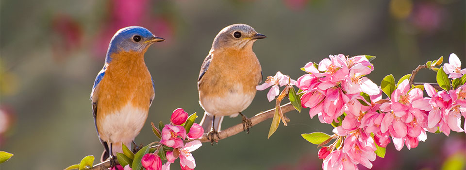 Birds sitting on tree branch